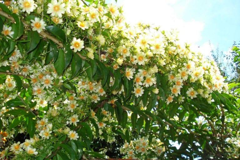 Ora-pro-nóbis, a planta que contém 25% de proteína!