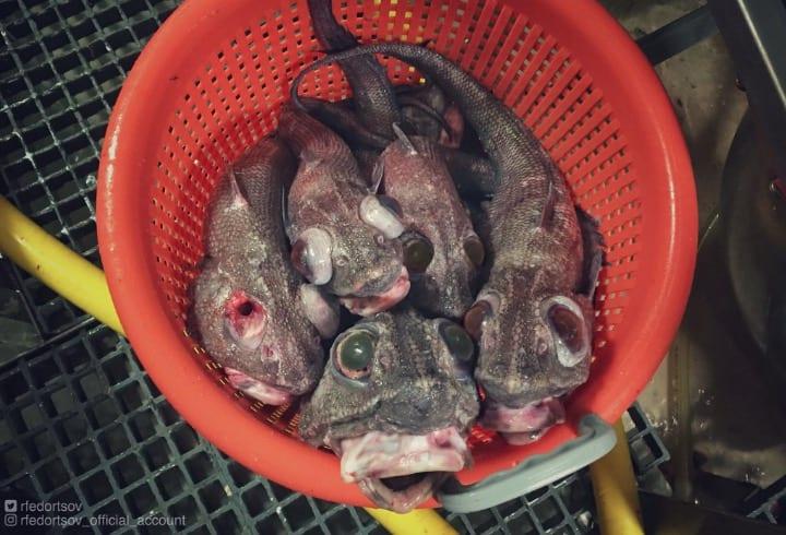 Pescador de águas profundas mostra animais assustadores que ele encontra por lá