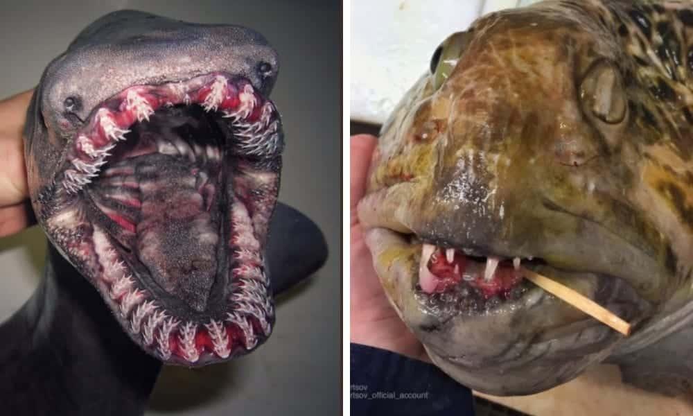 Animais de águas profundas: Pescador mostra os mais bizarros já vistos