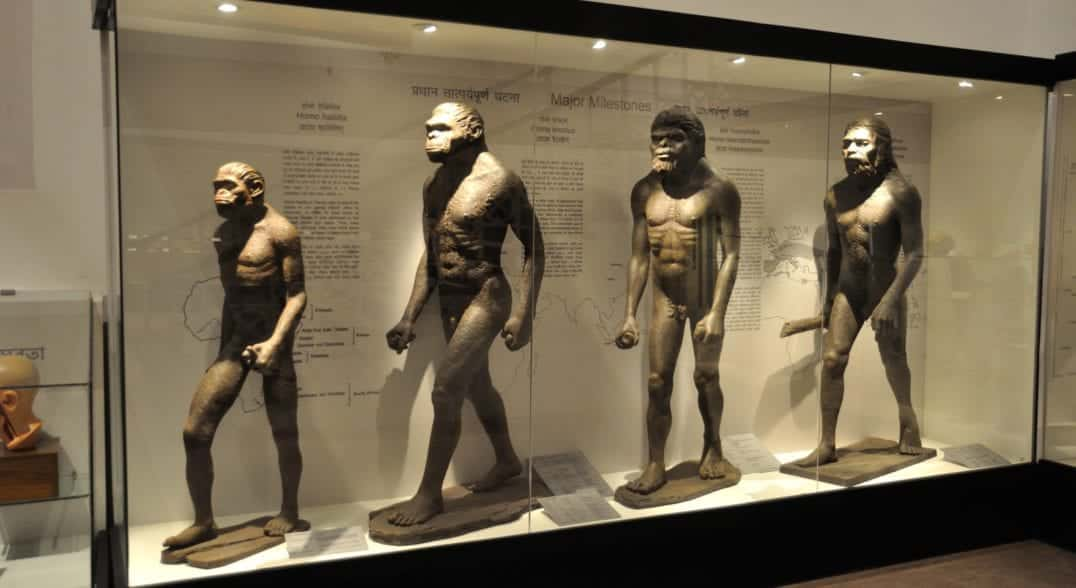 Se os seres humanos vieram dos macacos, por que ainda existem macacos?