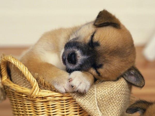 7 dicas muito valiosas para cuidar dos pets no verão