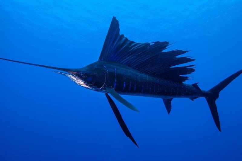Conheça os animais mais rápidos do mundo no ar, na terra e na água