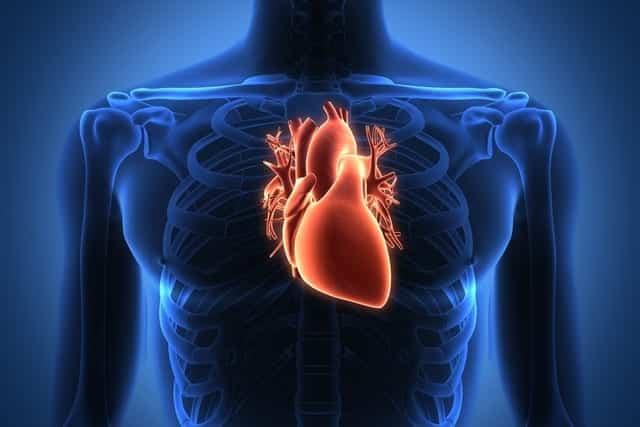 Por quanto tempo resistimos quando nosso coração para de bater?