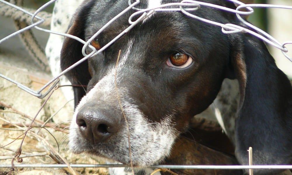 Maus-tratos contra animais é crime. Saiba como denunciar!