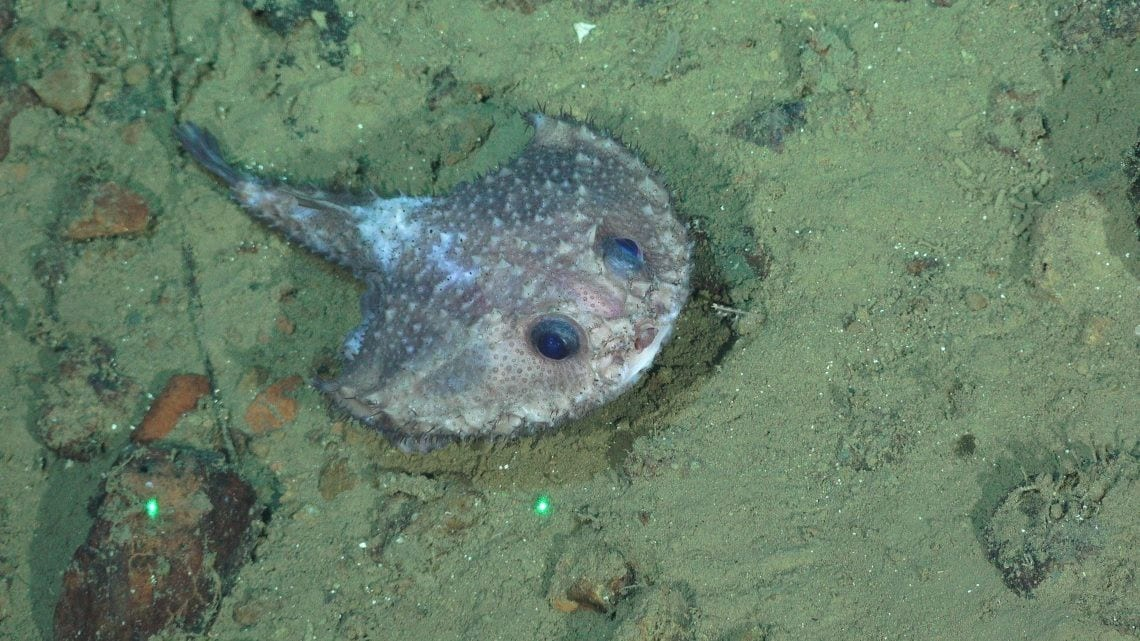 10 novas espécies marinhas foram descobertas na Costa Rica