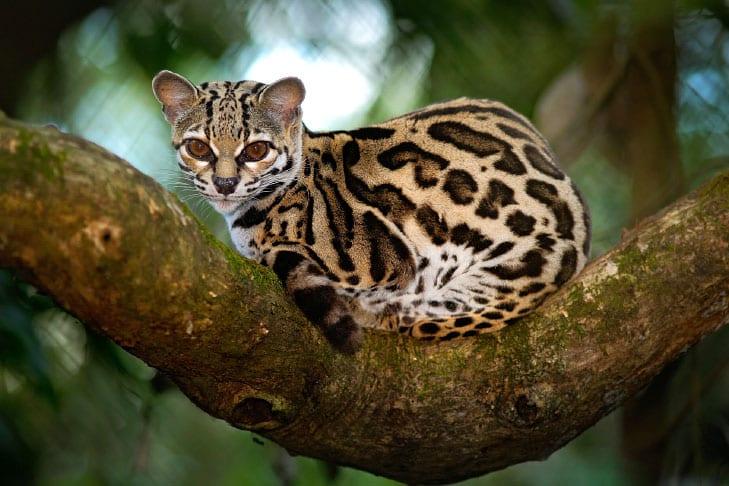 11 animais em extinção no Brasil que podem sumir nos próximos anos