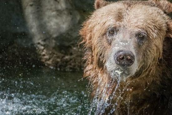20 curiosidades sobre animais que você não sabia
