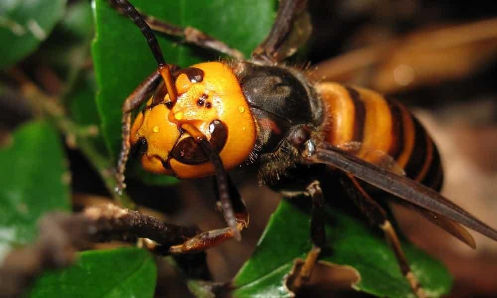 Picadas de inseto que você precisa aprender a diferenciar com urgência