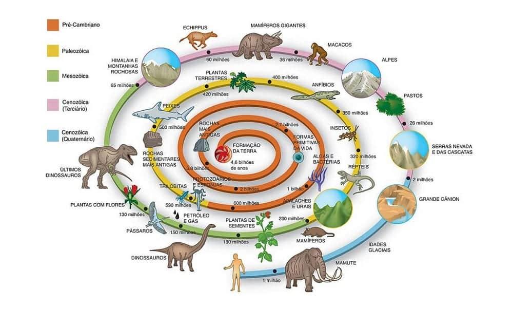 Primeiros seres vivos: quais eram, como e há quanto tempo surgiram?