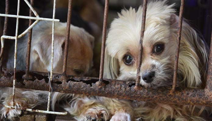 Maus-tratos contra animais é crime e você pode denunciar