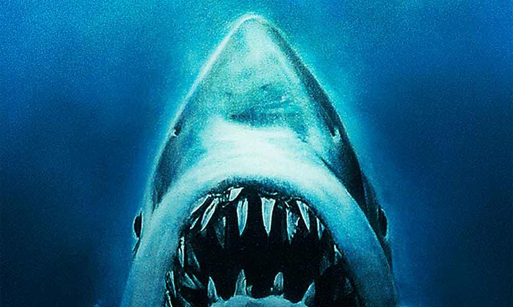 Tubarão de 400 anos é o animal mais velho do mundo