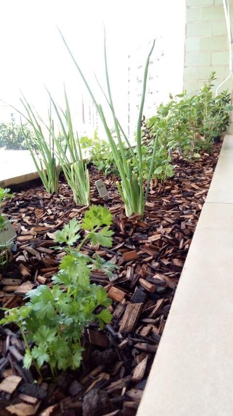 6 plantas ideias para ter em uma horta em casa, e imagens para inspirar!