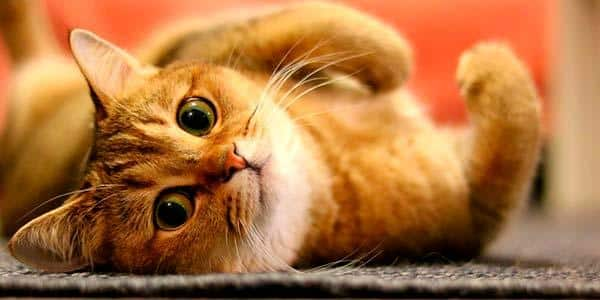 7 coisas que você precisa saber antes de adotar um gato