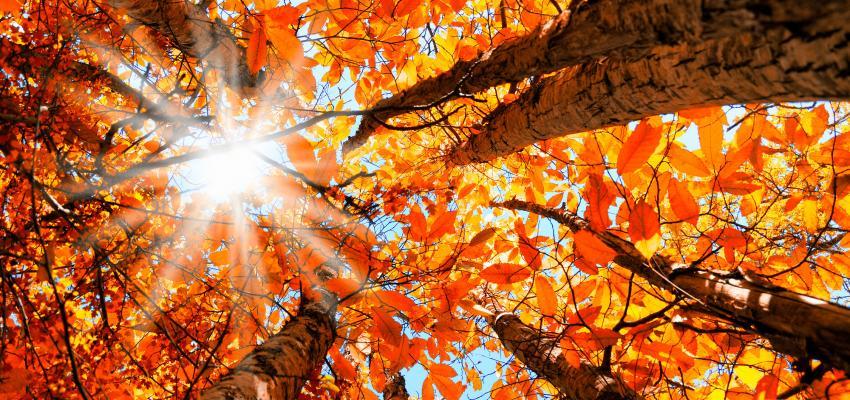 equinócio de inverno folhas
