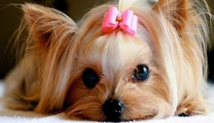 Precisa de inspiração para nome de cachorra? Veja essa lista