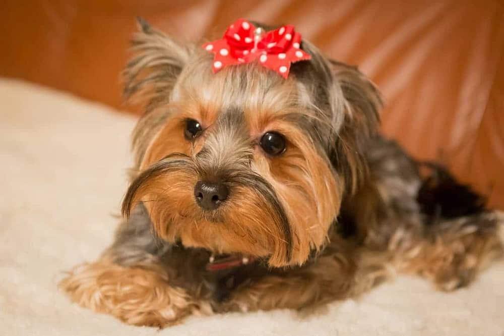 Nomes de cachorra, 200 inspirações de nome para sua cachorrinha