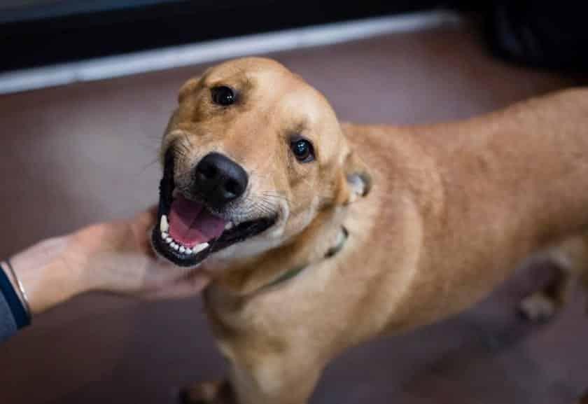 Saiba o que é necessário para se adotar um cachorro