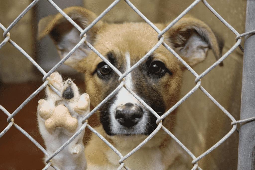 O que você precisa saber antes de adotar um cachorro