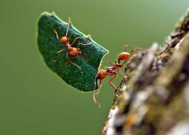 10 coisas que talvez você não sabia sobre formigas
