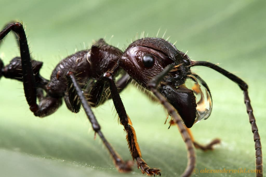Formigas, 10 segredos incríveis que talvez você não sabia sobre elas