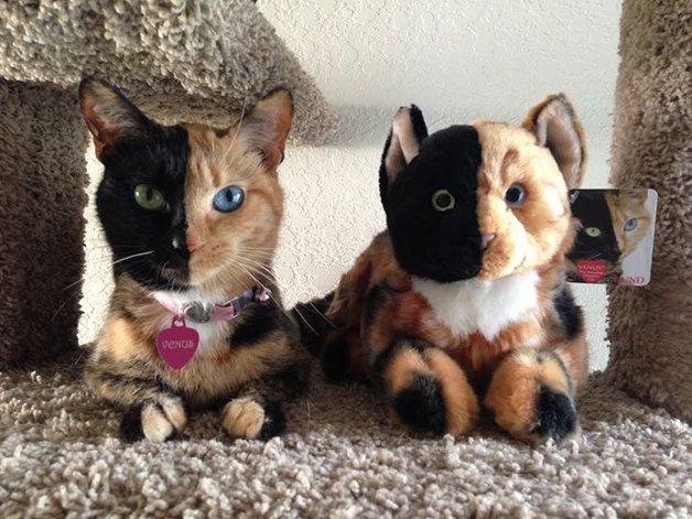 Gatinha conquista a internet por causa da sua aparência incrível