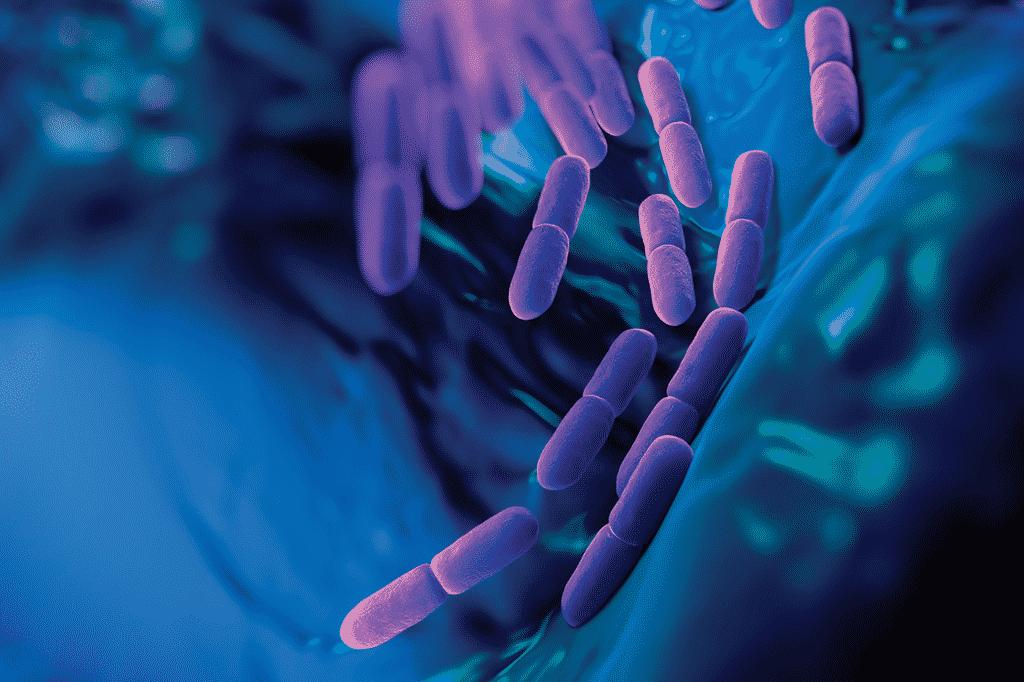 O que são e o que você precisa saber sobre lactobacilos vivos