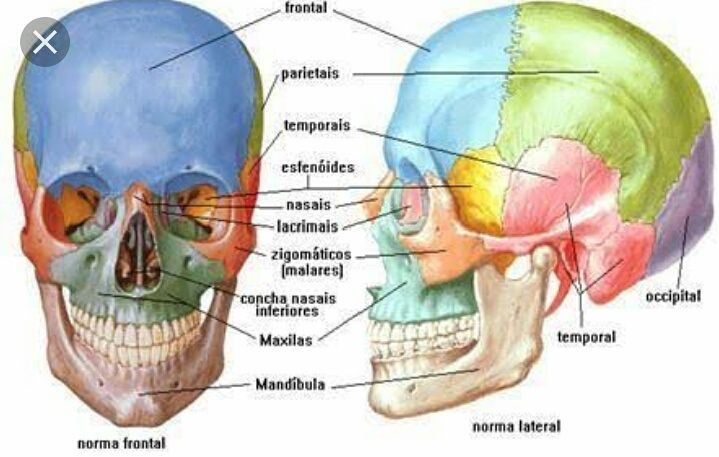 Para que serve os ossos do corpo humano? Quantos temos? Saiba mais