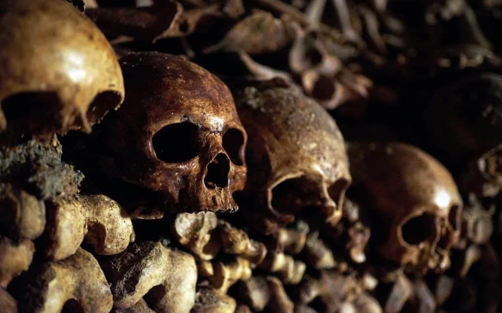 Ossos do corpo humano, quantos são e para que servem?