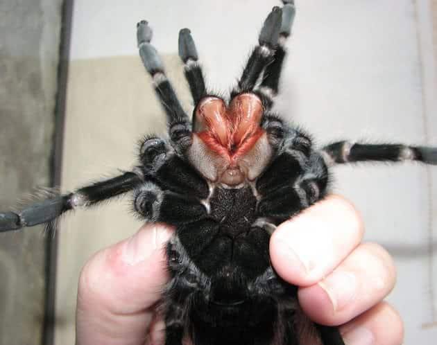 Quais são as aranhas mais venenosas do Brasil [Top 5]