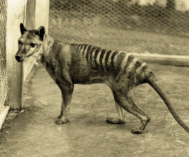 30 animais extintos durante os últimos séculos da humanidade