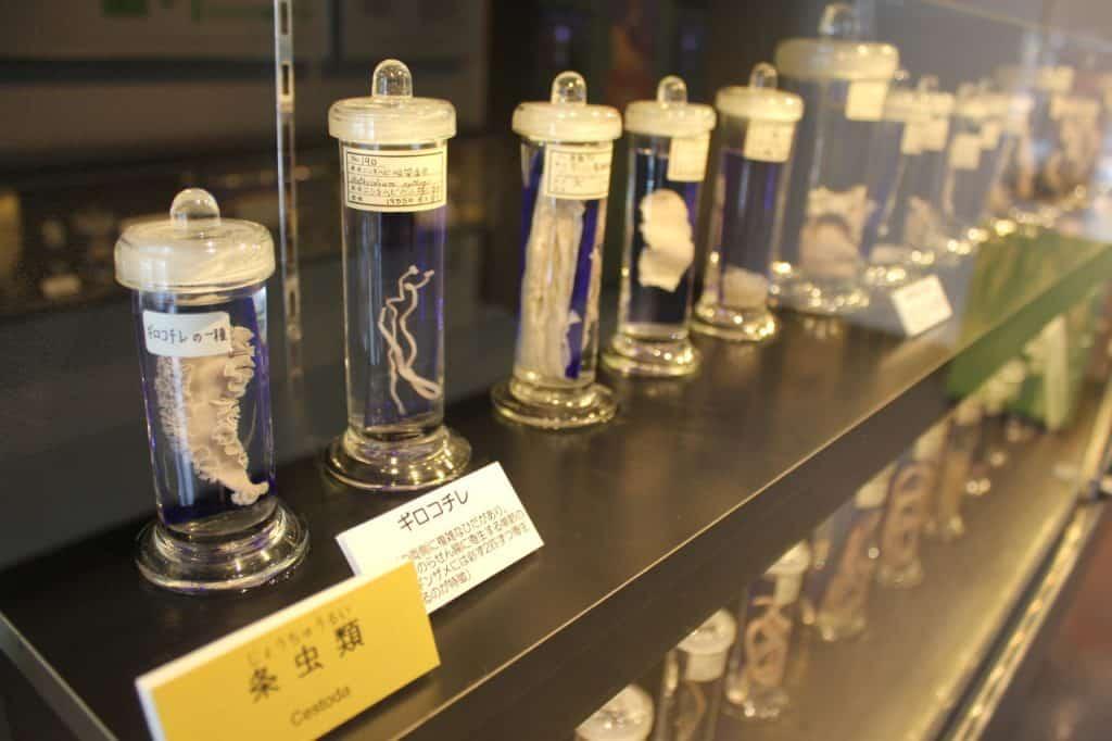 Arsenal de museus e 6 coisas bizarras que fazem parte dele