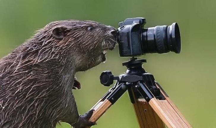 Está em um dia ruim? Vem conferir essas fotos de animais e relaxar