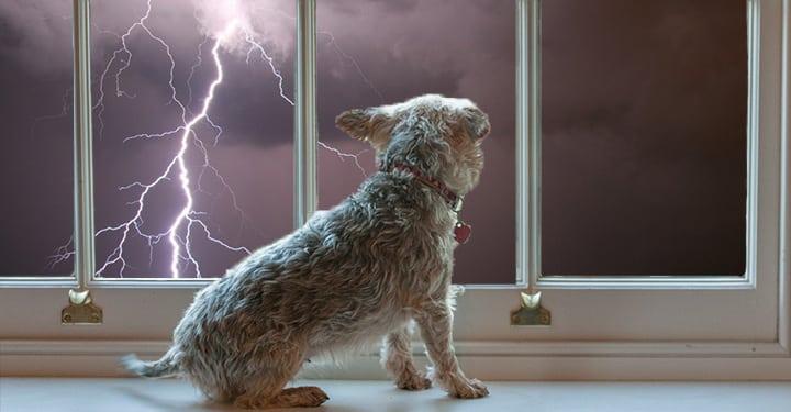 9 erros comuns que donos cometem na criação dos seus cachorros