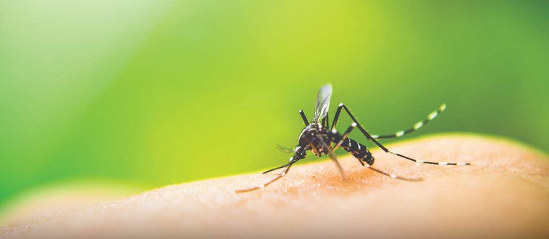 Sintomas da dengue - quais são e como tratar e prevenir a doença
