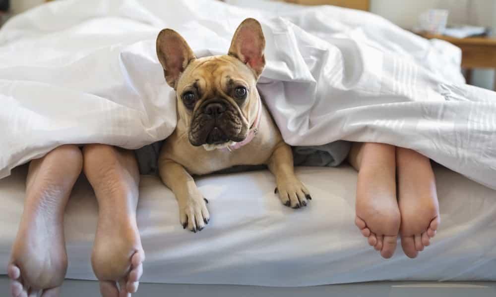 Cachorros, 9 erros comuns dos donos na criação dos cães