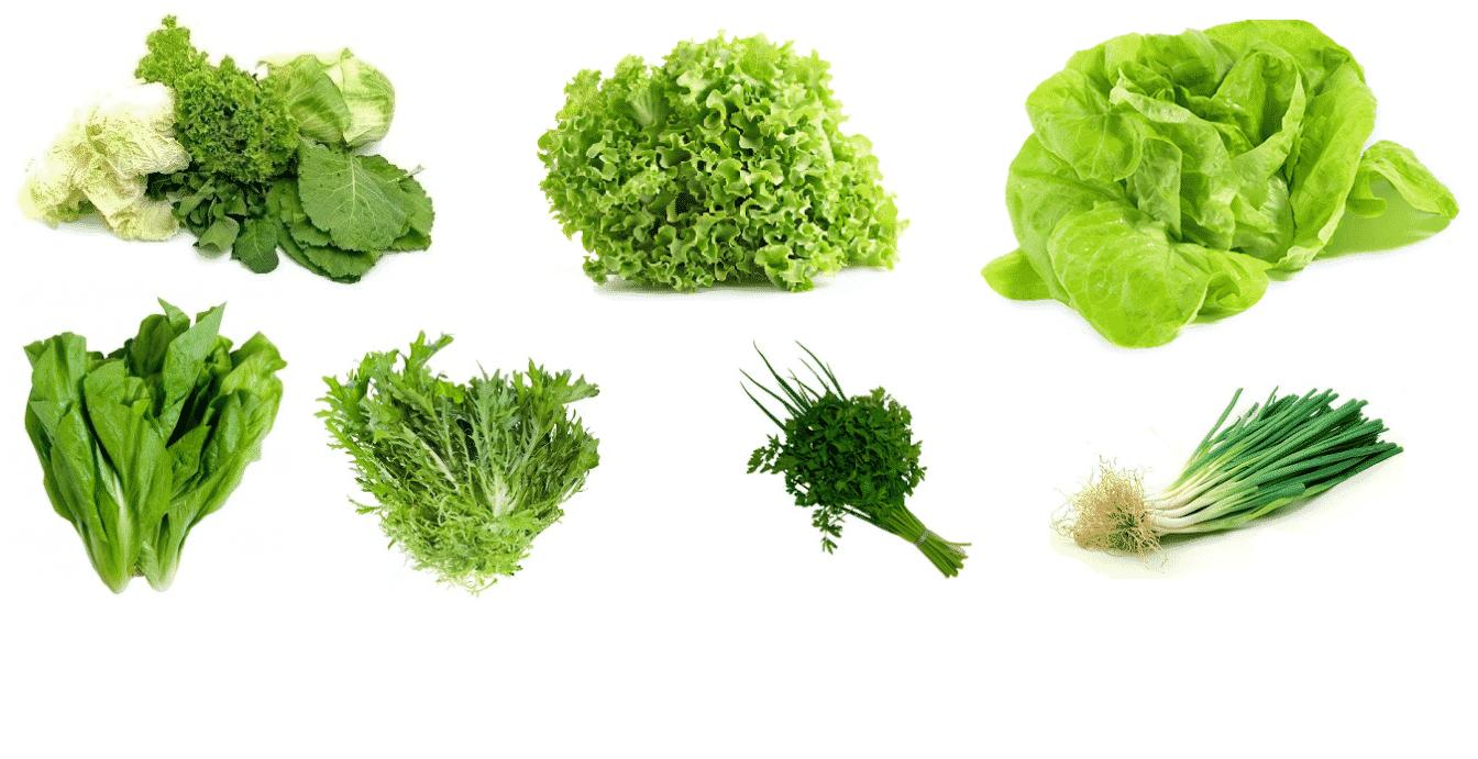 Descubra agora a diferença entre verdura, legumes e hortaliça