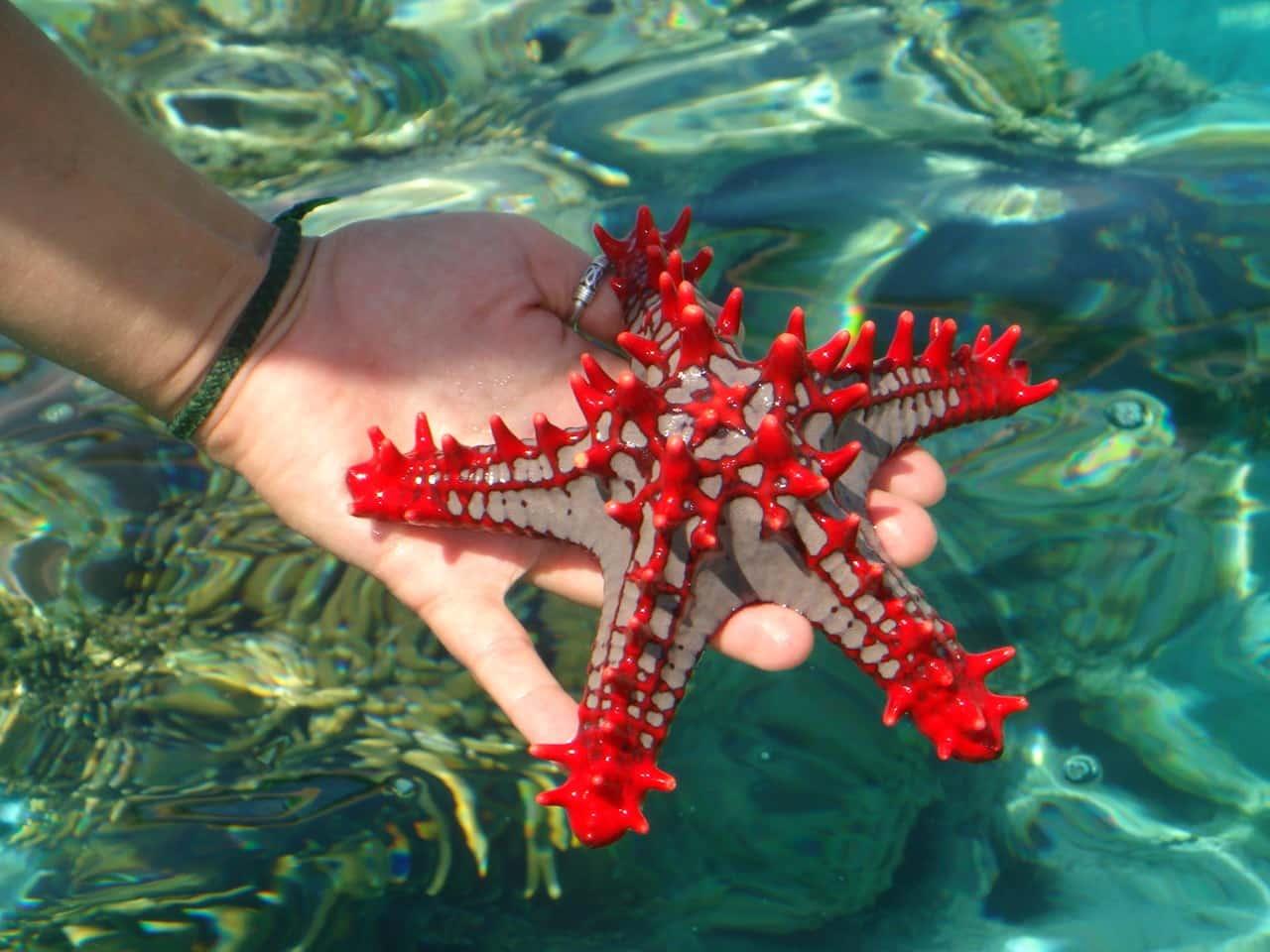Tudo que você precisa saber sobre as estrelas do mar