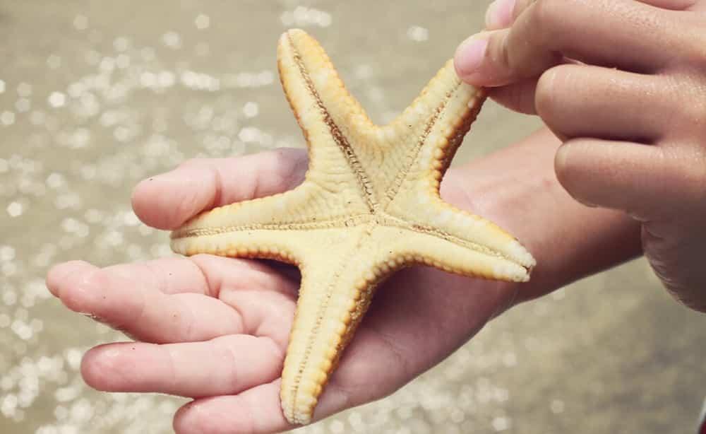 Estrelas do mar - anatomia, habitat, reprodução e curiosidades