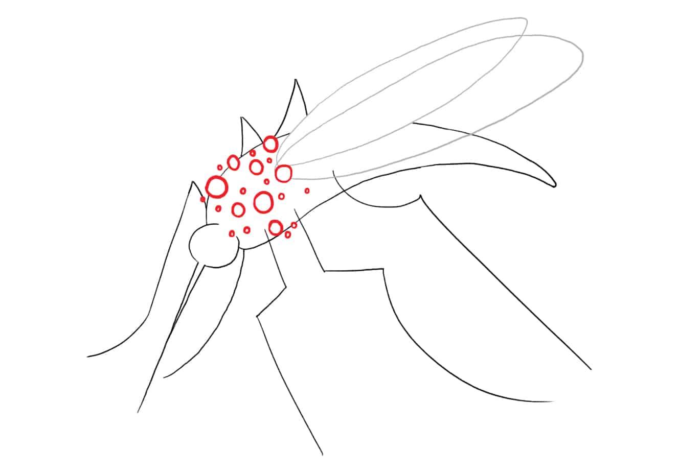 Chikungunya - transmissão, sintomas, tratamento e prevenção