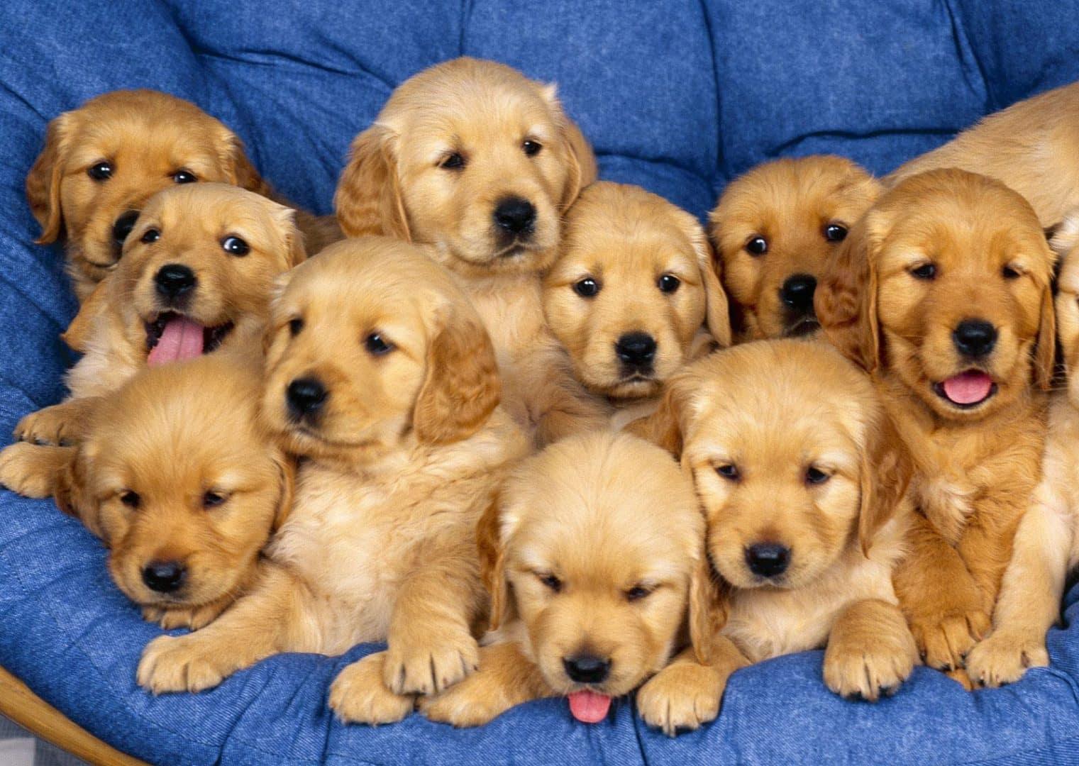 Filhotes de cachorro e 5 coisas que você precisa saber sobre eles