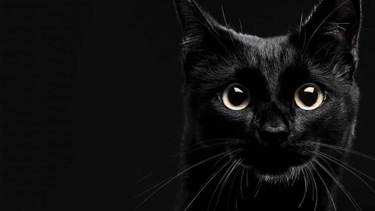 Por que gato preto é um sinônimo de azar? Confira!
