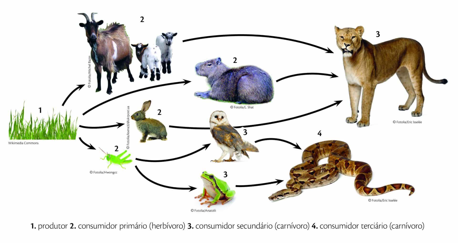 Tudo sobre sucuri. Tamanhos, venenos, reprodução, espécie. Confira