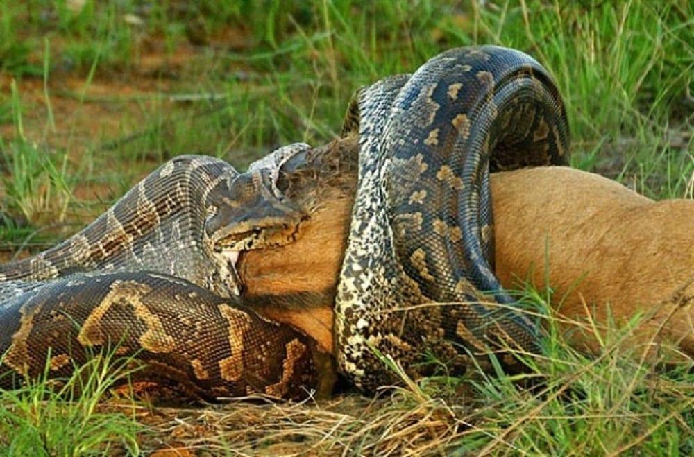 Animais selvagens - 10 imagens da vida selvagem de tirar o fôlego