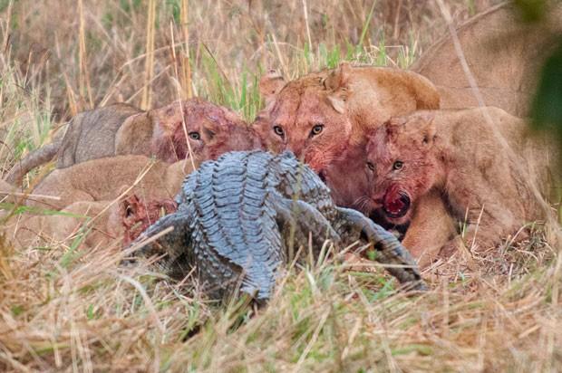 10 fotos de animais selvagens que vão chamar a sua atenção