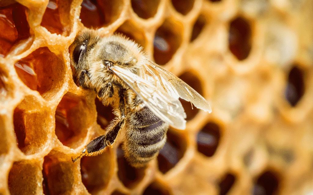 Como o mel é feito? – Papel das abelhas, matéria prima, transformação