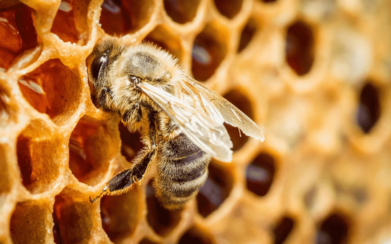 Como o mel é feito? - Papel das abelhas, matéria prima, transformação