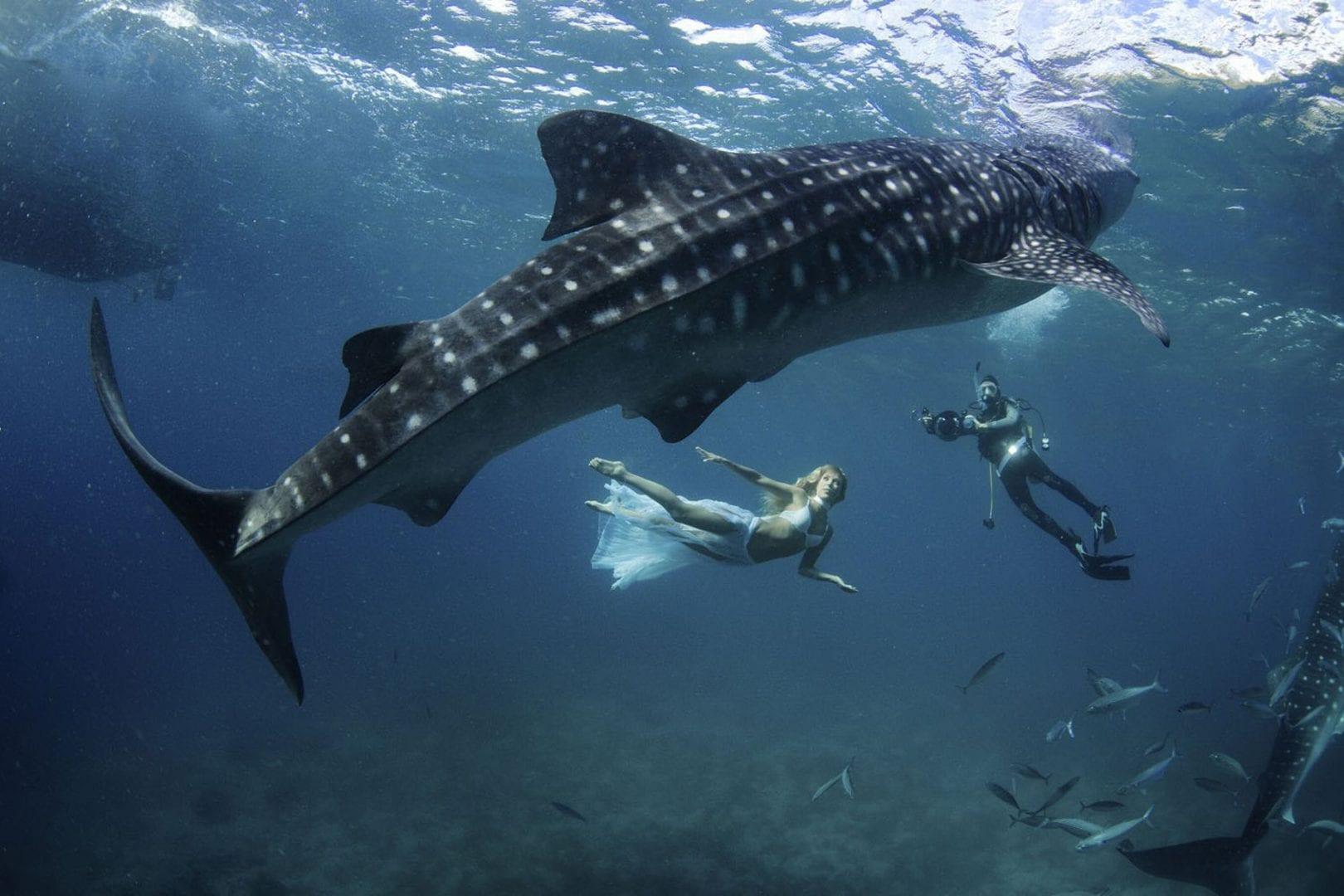 Cação e tubarão - São a mesma coisa ou existem diferenças?
