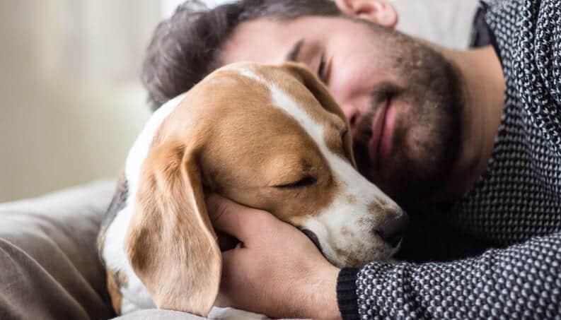 Idade de cachorros - Como calcular em relação com a idade humana