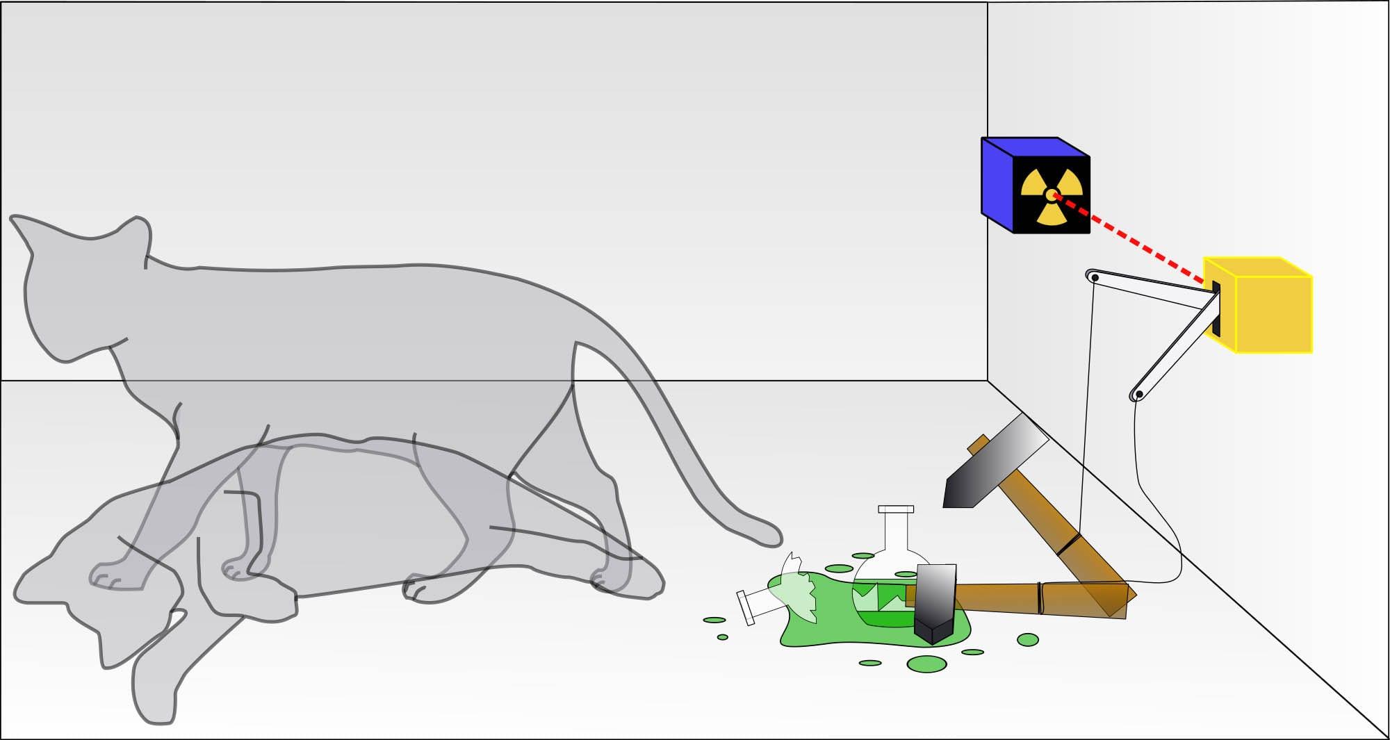 Já ouviu falar sobre a teoria do gato de schrödinger? Confira mais detalhes