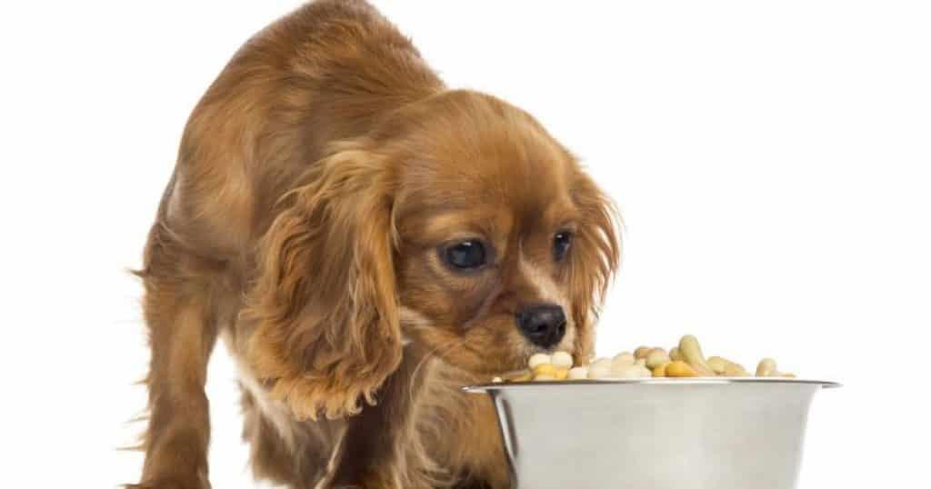 Peludos: 5 dicas para manter a saúde de cachorros com pelo longo